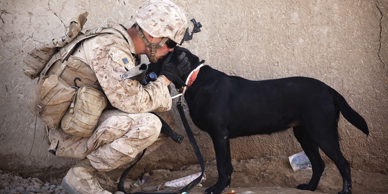 ptsd-service-dogs
